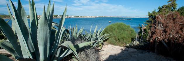 Hacer turismo rural en Mallorca navidad