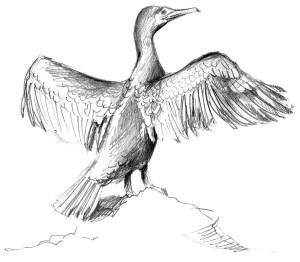 cormoran-limpio