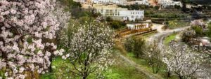 La flor de almendra convierte a Mallorca en un jardín que florece