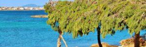 oferta de casas rurales en Mallorca